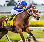 HALLANDALE BEACH, FLORIDA - APRIL 2:  Photo Call #4, ridden by Jockey Javier Castellano, coming around the final turn in the lead, and eventually wins the 56th Running of The Orchid at Gulfstream Park on April 2, 2016 in Hallandale Beach, Florida (photo by Doug DeFelice/Eclipse Sportswire/Getty Images)