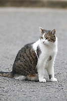 LONDON, UNITED KINGDOM - MARCH 25: Resident cat Larry sits outside 10 Downing Street in London, United Kingdom on March 24, 2021.<br /> CAP/GOL<br /> ©GOL/Capital Pictures