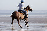 August 14, 2021, Deauville (France) - Polo Pony training at the beach in Deauville. [Copyright (c) Sandra Scherning/Eclipse Sportswire)]