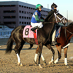 Master Lighting in the 144th running of the Grade II Jerome Stakes for 3-year olds, going 1 mile 70 yards on the inner dirt, at Aqueduct Racetrack.