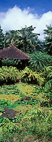 France/DOM/Martinique/Balata/Les jardins: Vue sur le bassin de Nymphéas entouré de fougères