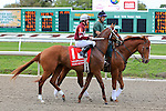 NEW ORLEANS, LA - MARCH 26: Gun Runner #1 with Florent Geroux up walking the post parade before the 103rd Louisiana Derby at Fairgrounds Race Course on March 26, 2016 in New Orleans, Louisiana. (Photo by Steve Dalmado/Eclipse Sportswire/Getty Images)