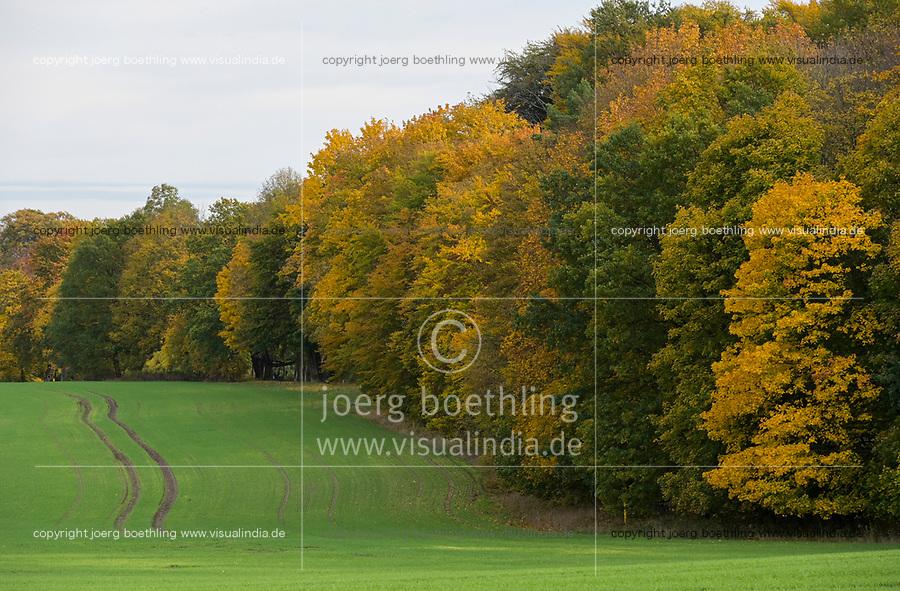 GERMANY, Mecklenburg, forest in autumn / DEUTSCHLAND, Mecklenburg-Vorpommern, intakter Wald, Laubwald mit buntem Laub im Herbst