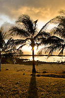 This backlit palm tree on Oahu's North Shore marks the end of another day of adventure.