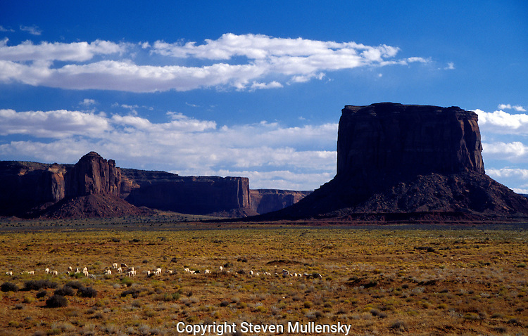Sheep graze in the shadow of the mesas that give Monument Valley its name.