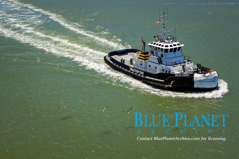 """tug boat owned by Bay Delta Maritime, """" Delta Carey """", with pelicans, San Francisco, California, USA, Pacific Ocean"""