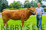 Sean O'Sullivan at his farm in Castleisland farmer with his prized Limousin cow 'Castleview Camelia.