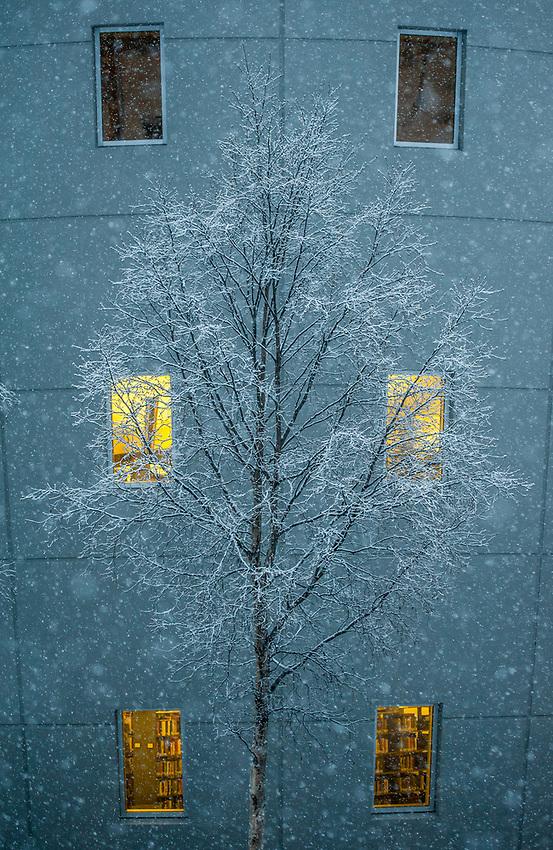 Heavy, wet snow falls on UAA's Consortium Library.