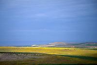 Landscape, Essouria, Morocco