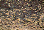 Gemsbok, Namib-Naukluft National Park, Nambia
