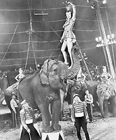 """The Greatest Show on Earth"" won the OscarÆ for Best Picture of 1952, and was the first film to receive this honor on live television as the 25th Academy AwardsÆ presentation was the first ceremony to be telecast.  Gloria Grahame (top) starred in the film as Angel the elephant girl while Lyle Bettger (right foreground) played Klaus the elephant trainer. Restored by Nick & jane for Dr. Macro's High Quality Movie Scans Website: http:www.doctormacro.com. Enjoy!"