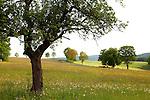 Europa, DEU, Deutschland, Hessen, Rhoen, Hessische Rhoen, Ebersburg, Typische Landschaft, Kategorien und Themen, Natur, Umwelt, Landschaft, Landschaftsfotos, Landschaftsfotografie, Landschaftsfoto, Tourismus, Touristik, Touristisch, Touristisches, Urlaub, Reisen, Reisen, Ferien, Urlaubsreise, Freizeit, Reise, Reiseziele, Ferienziele<br /> <br /> [Fuer die Nutzung gelten die jeweils gueltigen Allgemeinen Liefer-und Geschaeftsbedingungen. Nutzung nur gegen Verwendungsmeldung und Nachweis. Download der AGB unter http://www.image-box.com oder werden auf Anfrage zugesendet. Freigabe ist vorher erforderlich. Jede Nutzung des Fotos ist honorarpflichtig gemaess derzeit gueltiger MFM Liste - Kontakt, Uwe Schmid-Fotografie, Duisburg, Tel. (+49).2065.677997, ..archiv@image-box.com, www.image-box.com]