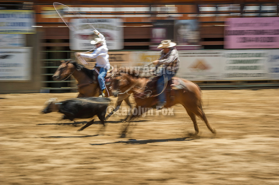 75th Amador County Fair, Plymouth, Calif.<br /> <br /> Day 3--Local team roping Seth Seever & Jason Belli