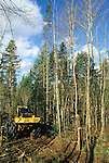 Tree harvesting on Seven Islands land in Northern Maine, USA