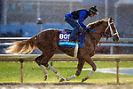 November 1, 2018: King of Speed, trained by Jeffrey L. Bonde, exercises in preparation for the Breeders' Cup Juvenile Turf at Churchill Downs on November 1, 2018 in Louisville, Kentucky. Alex Evers/Eclipse Sportswire/CSM