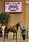 September 09, 2014: Hip #358 Pulpit - Twist colt consigned by Indian Creek, sold for $600,000 to Maverick Racing at the Keeneland September Yearling Sale.   Candice Chavez/ESW/CSM