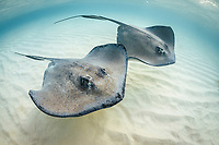 Rays & Cartilaginous Fish
