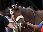 Redeemed in the walking ring before finishing second in the 2nd running of the Smarty Jones Stakes at  Parx Racing in Bensalem, PA, on September 5, 2011.  (Joan Fairman Kanes/Eclipsesportswire)