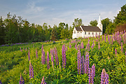 Lupine Festival (an annual event) in Sugar Hill, New Hampshire during the spring months. St. Matthew's Chapel is in the background. The Gothic Revival style St. Matthew's Church was built in 1893.