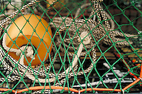 detail of lobster trap