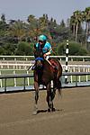 June 21, 2014: Jojo Warrior with Martin Garcia aboard wins the Grade II Summertime Oaks at Santa Anita Park in Arcadia, California. Zoe Metz/ESW/CSM