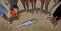 Children gather around a dead fish washed up on shore at beach