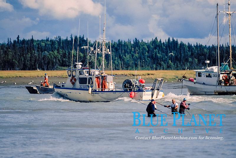 sport fishermen dip netting for sockeye salmon, Oncorhynchus nerka, or red salmon, in the Kasiloff River, Kenai Fjords National Park, southcentral Alaska, USA, Pacific Ocean, USA