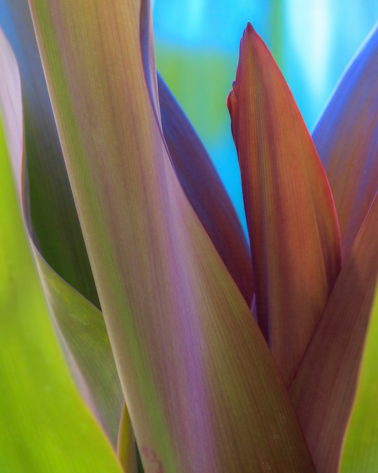 An intimate look at the curves of Hawaii's tropical flora.
