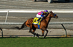 """ARCADIA, CA  SEP 26: #4 Mucho Unusual, ridden by Juan Hernandez, leads the rest of the field  on her way to winning the Rodeo Drive Stakes (Grade l) """"Win and You're In Breeders' Cup Filly and Mare Turf Division"""" on September 26, 2020 at Santa Anita Park in Arcadia, CA.. (Photo by Casey Phillips/Eclipse Sportswire/CSM."""