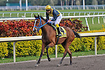 14 February 2010: Dancing Rage with Luis Arango in the Coconut Grove Stakes at Gulfstream Park in Hallandale Beach, FL.