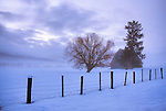 Idaho,Central,New Meadows. A rustic barn with trees and fence in a foggy and snow covered landscape at dawn in winter.