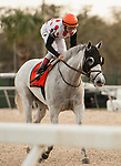 TAMPA, FL - February 10: World Approval, #7, finishes his state-side Dubai prep with a win under John Velazquez in the Tampa Bay Stakes (Grade II) for trainer Mark Casse at Tampa Bay Downs on February 10, 2018 in Tampa, FL. (Photo by Carson Dennis/Eclipse Sportswire/Getty Images.)