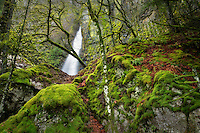 Cabin Creek Falls with moss covered rocks and trees. Columbia River Gorge National Scenic Area, Oregon