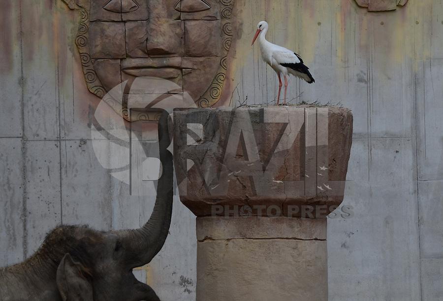 MADRI, ESPANHA - 17.02.2016: ZOO-ESPANHA - Os elefantes de Sumatra Valentino,12 anos, e Bogor, 4 anos, são vistos no zoológico de Madri, nesta quarta-feira (17). (Foto: Jorge Sanz Garcia/Brazil Photo Press)