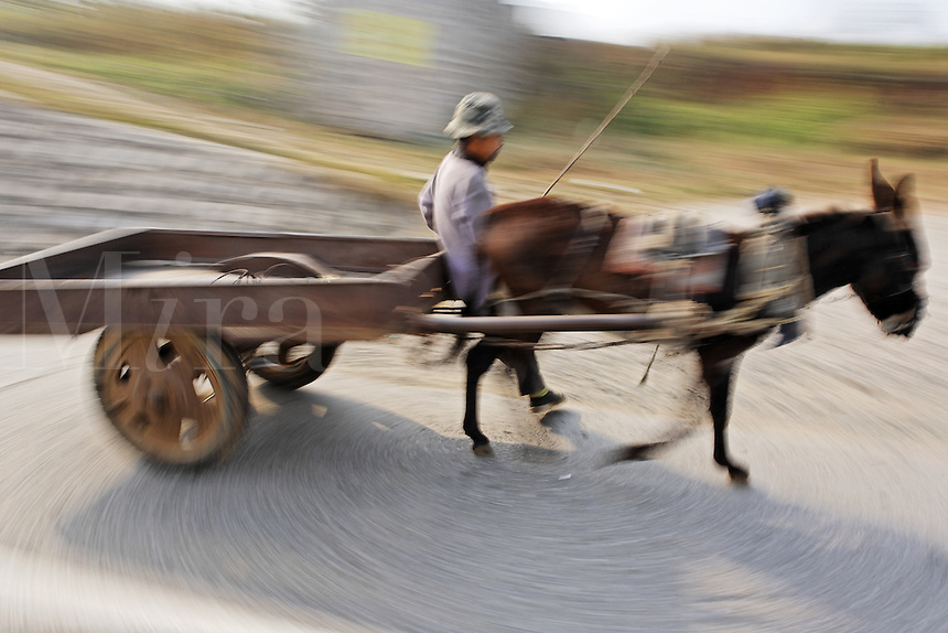 Man driving donkey pulling cart down road, China, Asia