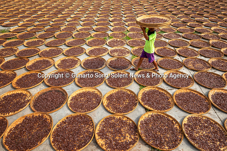 "Pictured: A worker moves among hundreds of bamboo trays filled with large, colourful garlic-flavoured crackers.   The Indonesian delicacies are steamed before being cooked and thinly sliced and left in the sun to dry.<br /> <br /> The photos were taken in the small village of Kenanga just outside Indramayu City in Indonesia by travel and landscape photographer Gunarto Song.   The 44-year-old, from Jakarta, said: ""The locals make crackers every day. They wrap the dough in banana leaves before steaming them for three to four hours.   SEE OUR COPY FOR DETAILS<br /> <br /> Please byline: Gunarto Song/Solent News<br /> <br /> © Gunarto Song/Solent News & Photo Agency<br /> UK +44 (0) 2380 458800"
