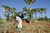 KENYA, Mount Kenya East, Region South Ngariama , farmer irrigates Khat shrubs and vegetable plants, Khat is traded as chewing drug  / KENIA, Farmer bewaessert Khat Straeucher und Gemuese Pflanzen, Khat wird als Kaudroge illegal gehandelt