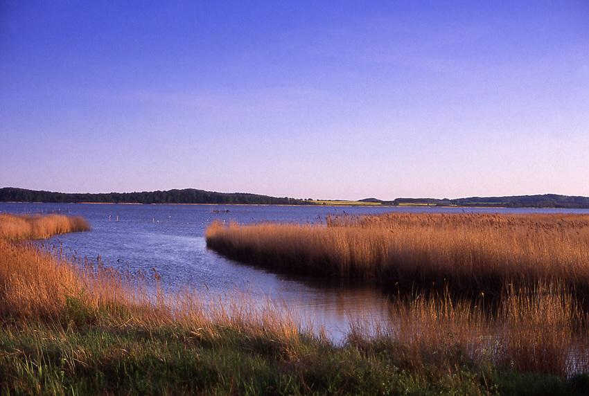 Europe, DEU, Germany, Mecklenburg West Pomerania, Rugen Island, Lietzow, Little Jasmunder Bodden, Typical landscape, Banks, Shore