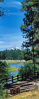 Metolius River with horses in meadow color. Oregon.