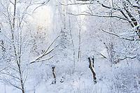 Winter, Schnee, verschneite Äste, Winterlandschaft, Winterstimmung, winterlich, eisig, kalt, Norddeutschland, snow