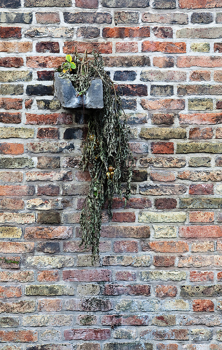 Flower box on a brick wall in Bruges, Belgium