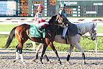 NEW ORLEANS, LA - FEBRUARY 25: Shareholder Value #5, ridden by Mitchell Murrill,  Risen Star Stakes race on Risen Star Stakes Day at Fair Grounds Race Course on February 25, 2017 in New Orleans, Louisiana. (Photo by Jarrod Monaret/Eclipse Sportswire/Getty Images)