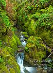 Cataract Creek, Mount Tamalpais, Marin County, California