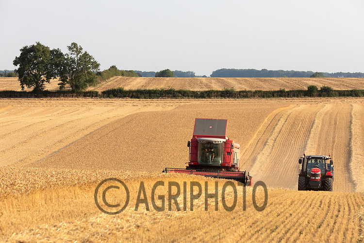 11.8.2020 Harvesting Wheat in Rutland <br /> ©Tim Scrivener Photographer 07850 303986<br />      ....Covering Agriculture In The UK.