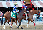 Nonna Madeline in the post parade as Sippican Harbor (no. 6) wins the Spinaway Stakes (Grade 1), Sep. 1, 2018 at the Saratoga Race Course, Saratoga Springs, NY.  Ridden by  Joel Rosario, and trained by Gary Contessa, Sippican Harbor finished 2 lengths in front of Restless Rider (No. 11).  (Bruce Dudek/Eclipse Sportswire)