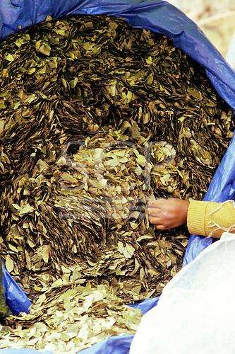 Bolivia. Large bag of coca leaves.