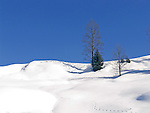 Austria, Tyrol, Winter scenery near Kirchberg in Tyrol   Oesterreich, Tirol, bei Kirchberg in Tirol: Winterlandschaft