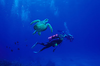 Woman scuba diving with Hawaiian green sea turtle