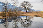 Ruggeller Ried, Ruggell, Rheintal, Rhine-valley, Liechtenstein.