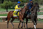 ARCADIA, CA. SEPTEMBER 30: #4 Vale Dori, ridden by Joseph Talamo, in the post parade of the Zenyatta Stakes (Grade l) on September 30, 2018, at Santa Anita Park in Arcadia, CA.(Photo by Casey Phillips/Eclipse Sportswire/CSM)